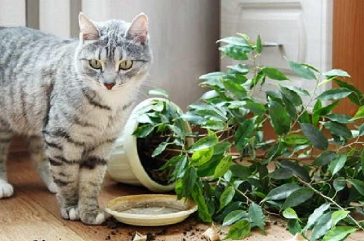 Kambariniai augalai ir katės: sunku sutarti