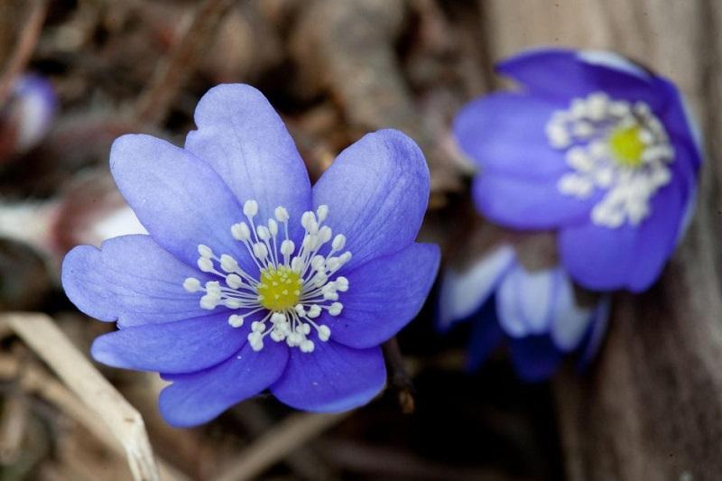 Pavasaris bando mūsų kantrybę