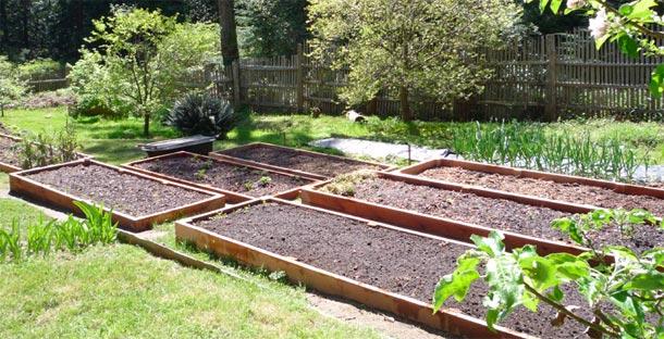 Štai kur klausimas: kasti ar nekasti dirvą?