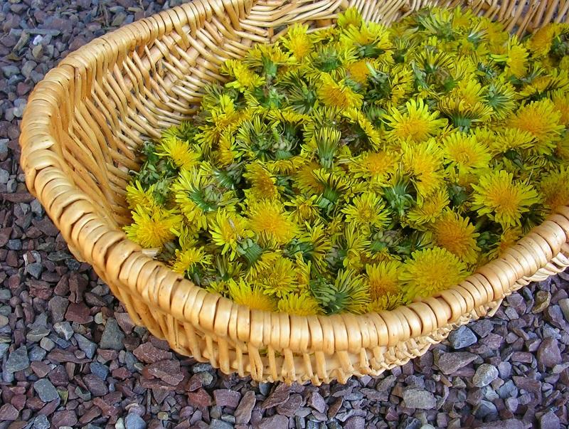Pirmieji augalai – tikra vitaminų bomba
