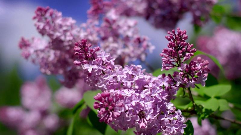 Gegužės pabaiga – ir jau pavasaris