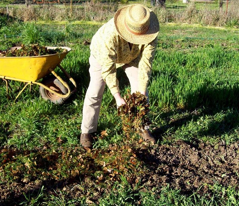 Naminis mulčias: geras derlius ir daug laisvalaikio