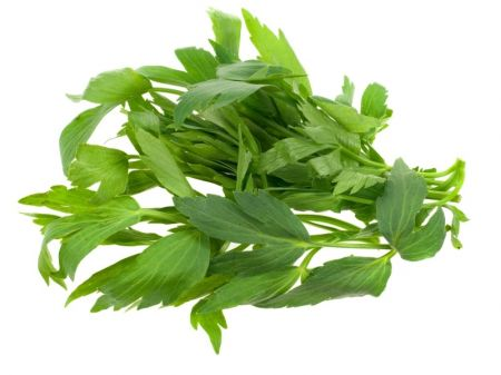 Gelsvė – aromatingoji sveikatos žolė iš Persijos
