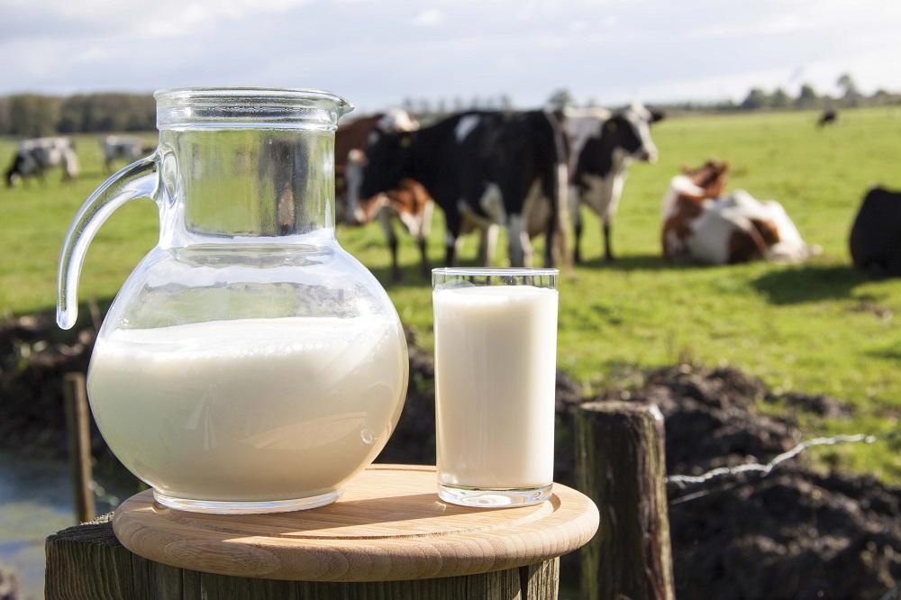 Kodėl superkamas pienas pigesnis už vandenį?