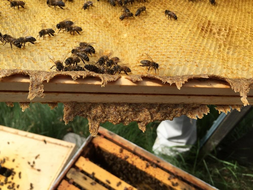 Bičių produktai – Jūsų sveikatai – rinkiskultura.lt