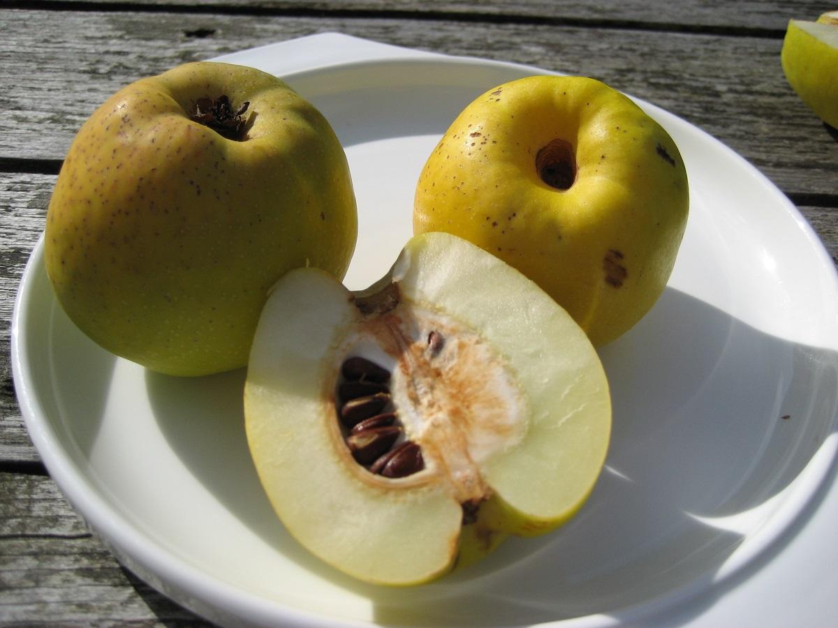 Svarainis puikiai atstoja vitaminų žirnelį