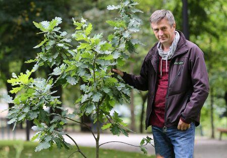 150 metų medžiai tik ir gelbėjo Gedimino kalną