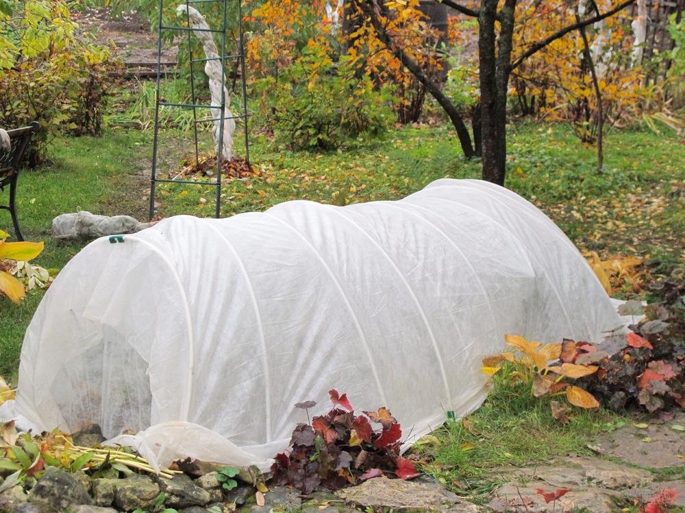 Daržo virtuozai dabar jau sodina bulves