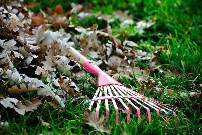 Apie tai žinome mažai: kaip paruošti veją žiemai
