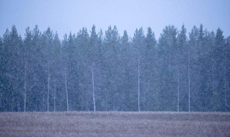 Žiemos pradžia. Dar nedrąsi, bet į tą pusę