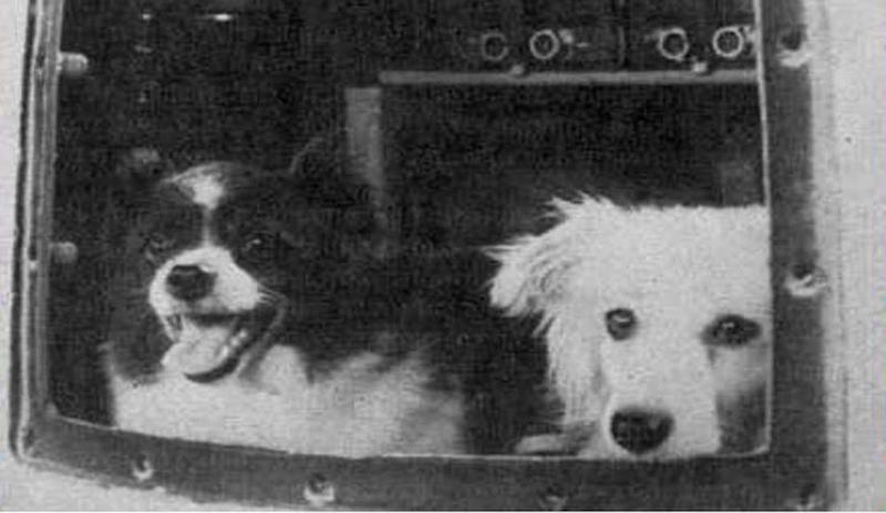 JAV į kosmosą kėlė beždžiones, SSRS – šunis