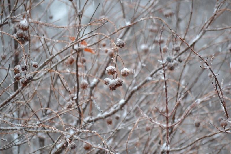 Sode ar darže yra ką veikti ir žiemą