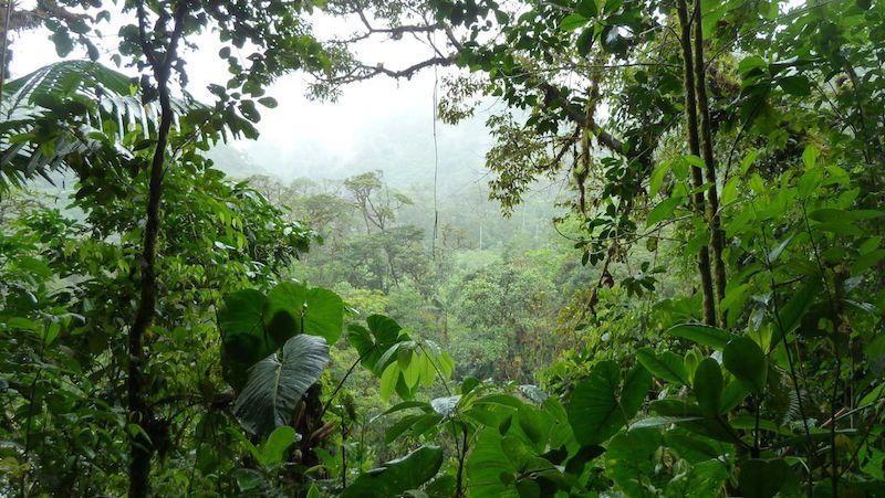 Žaliąjį džiunglių pragarą teko praverti ir lietuvei