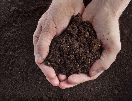 Žemė–derlius–gyvybė. Kaip gerinti žemės kokybę