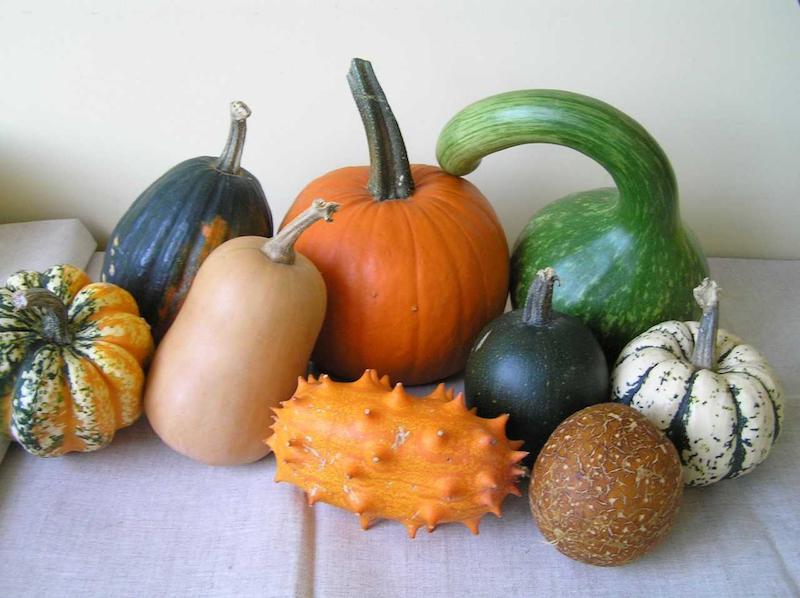 Kaip lietuviškoje žemėje auga daržovės iš užsienio?