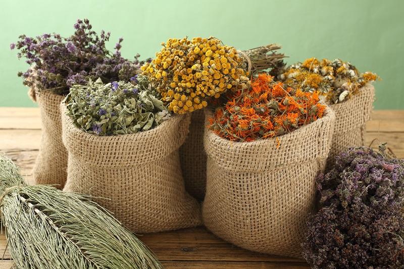 Gydymas vaistažolėmis ir homeopatija – ne tas pats