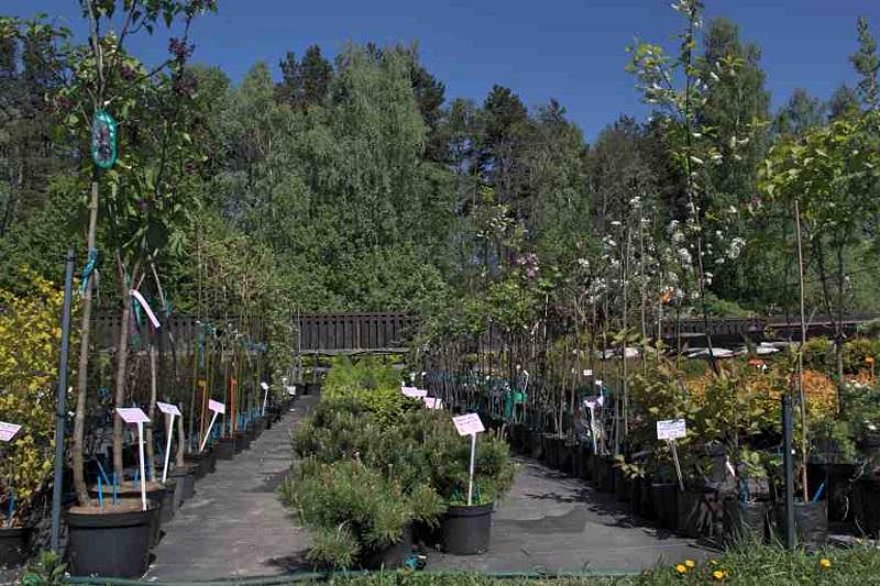Augalai laikinuose induose: kaip pirkti ir auginti