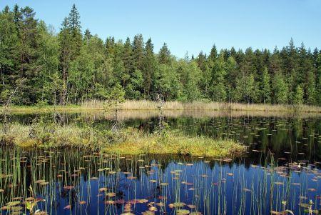 """""""Savaitė"""": Ar išvalysime Lietuvos ežerus?"""