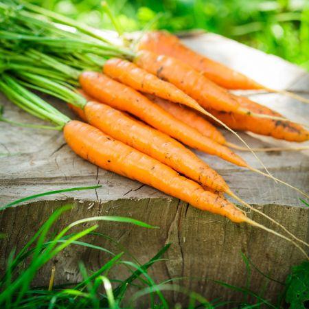 Kokiomis liaudiškomis priemonėmis tręšti morkas