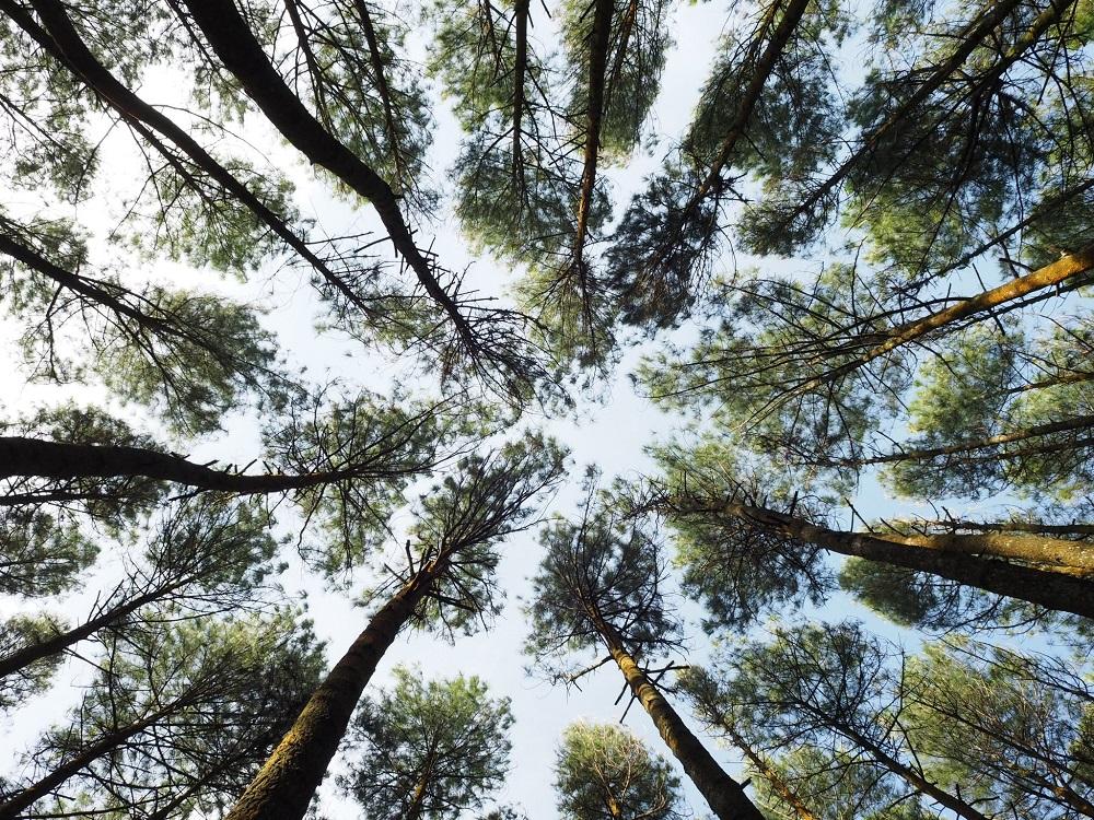 Tūkstančiai žmonių reikalauja atšaukti sprendimą didinti miškų kirtimo normą
