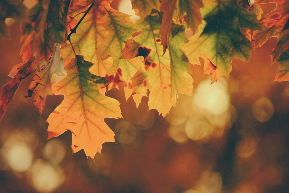 Naudingi patarimai: kaip psichologiškai pasiruošti rudeniui?