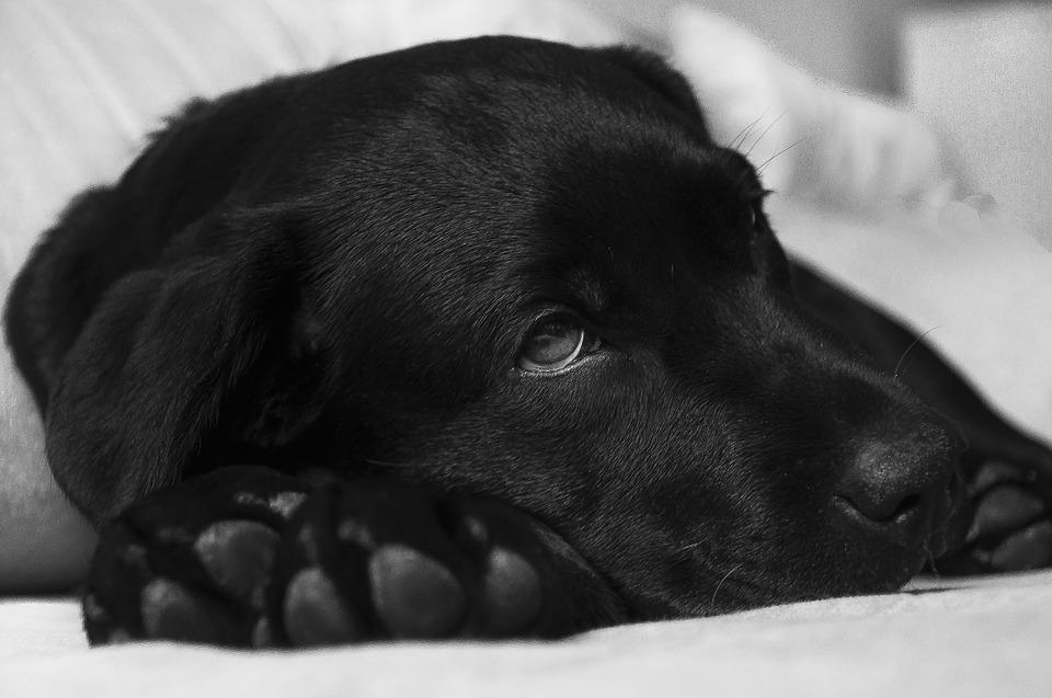 Kaip atpažinti pirmuosius gyvūno apsinuodijimo požymius ir suteikti pagalbą?