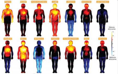 Emocijas mes jaučiame ne tik savo galvoje ir širdyje – reaguodama į cheminius pokyčius organizme, pakinta visa mūsų organizmo būklė.