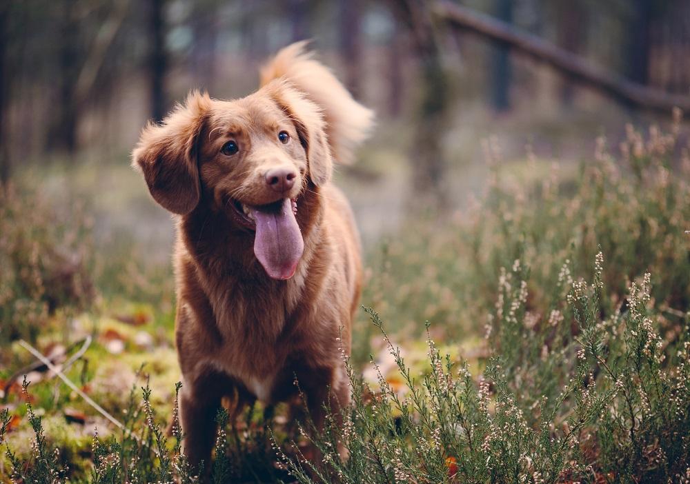 Nepale prasidėjo penkias dienas truksianti šunų šventė