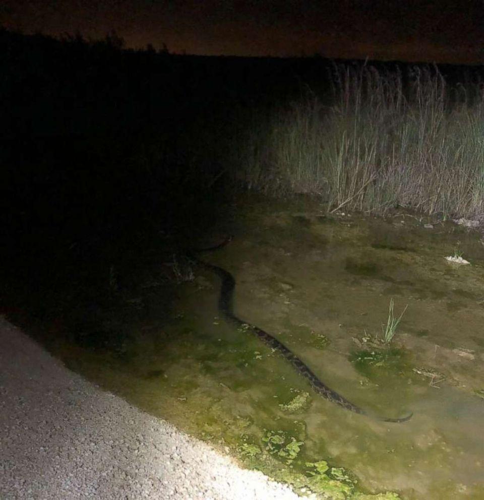 Floridoje sugautas rekordinio dydžio pitonas