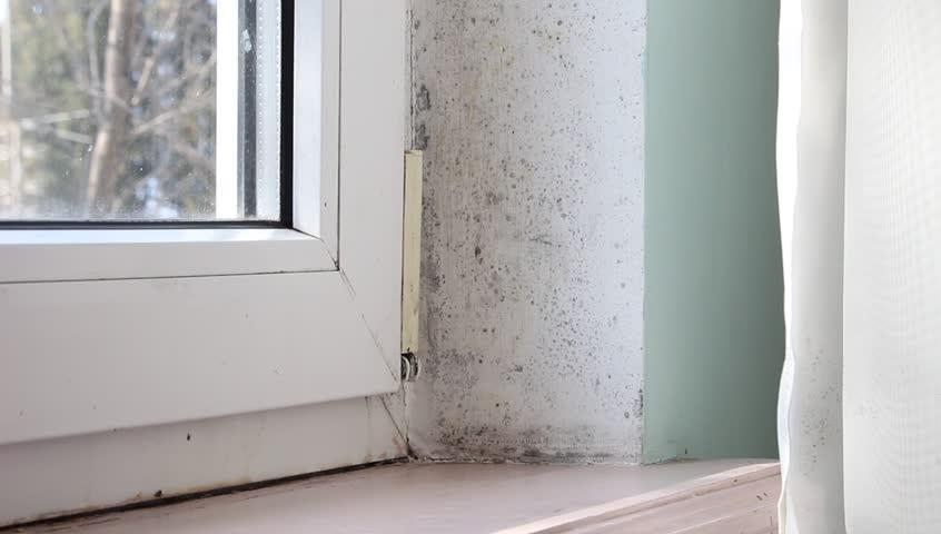 Naudingi patarimai: kaip apsaugoti namus nuo pelėsio