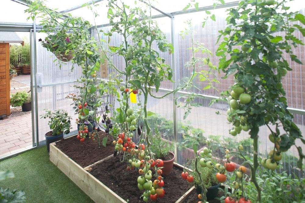 Patarimai sodininkams: kuo dezinfekuoti šiltnamius?