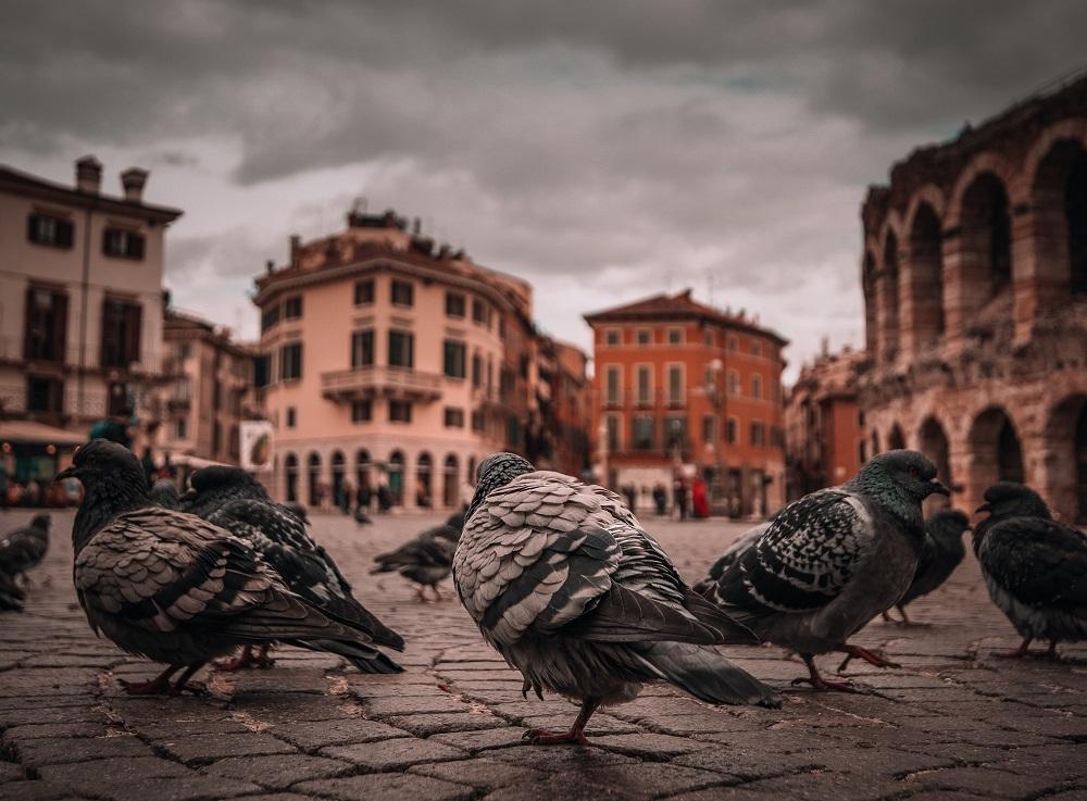 Ispanija: didėjant balandžių populiacijai, Kadiso miestas 5 tūkst. paukščių pergabens į kitą vietą
