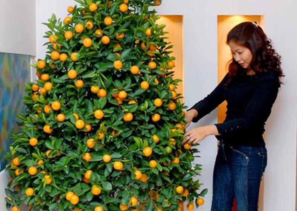 Kokie augalai yra laikomi Kalėdų simboliais?