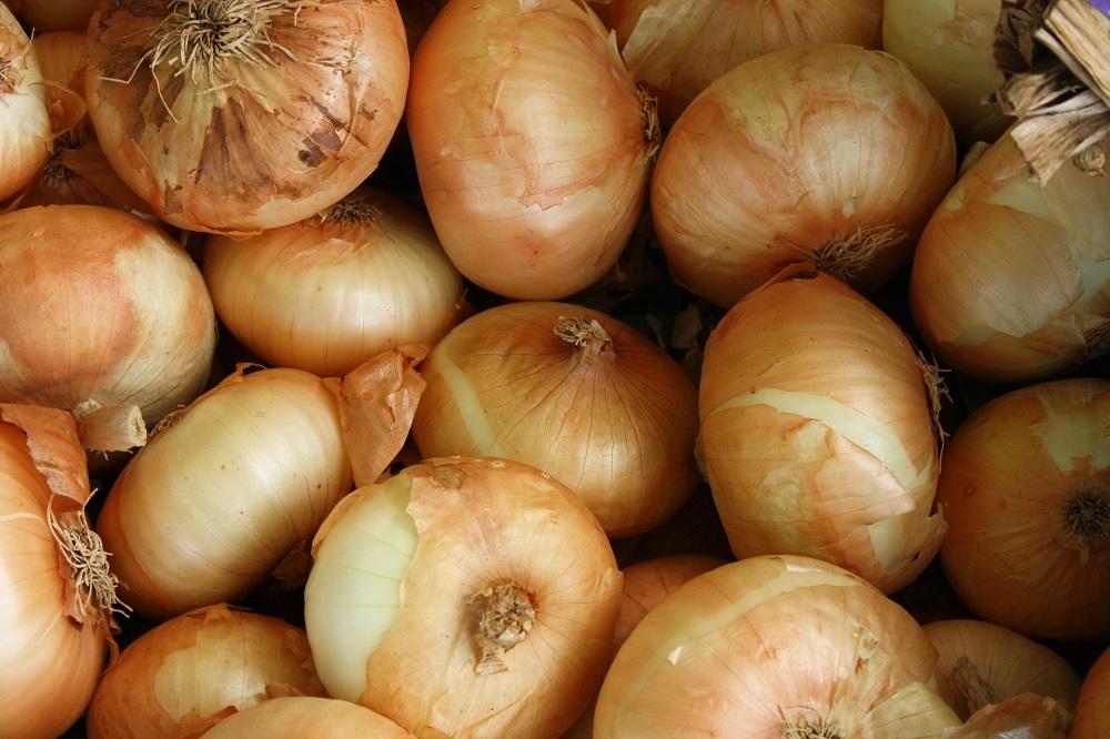Stichijų pasekmės: svogūnų derlius - mažiausias nuo 2006 metų