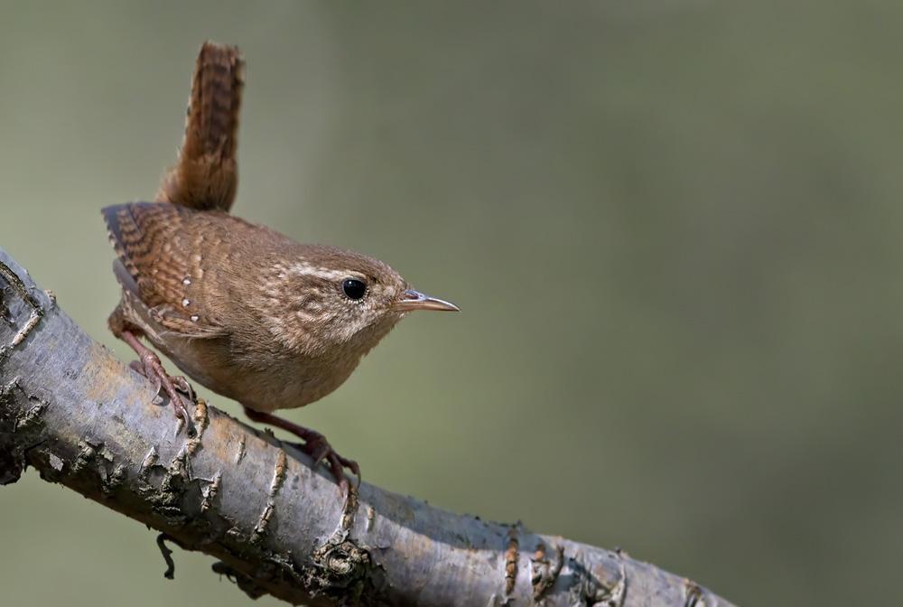 """""""Namie ir Sode"""" aktualijos: gėlių sėja, genėjimo nauda ir gražiausias žiemos paukštis"""