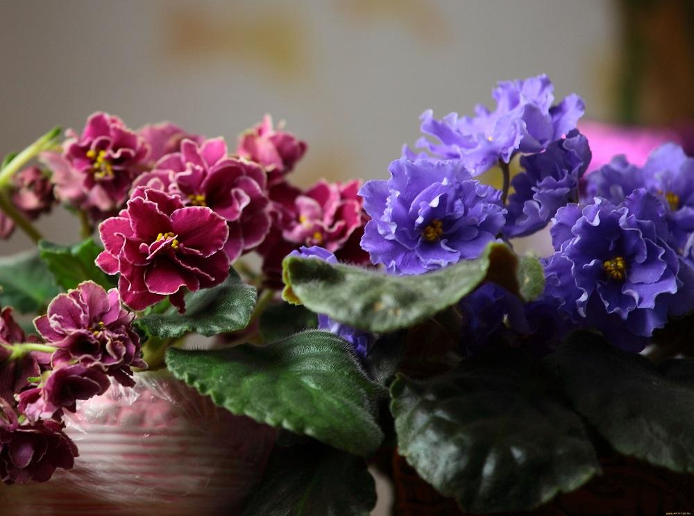 Kambarinės gėlės: ar galima išsiversti ir be cheminių medžiagų?