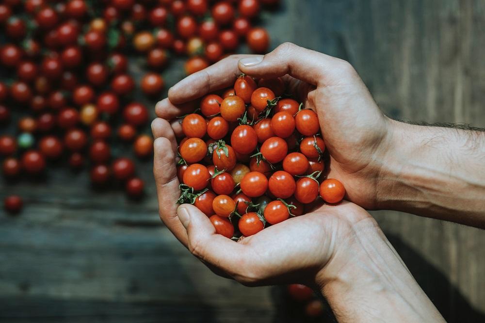 Patarimai sodininkams: kaip padidinti pomidorų derlingumą?