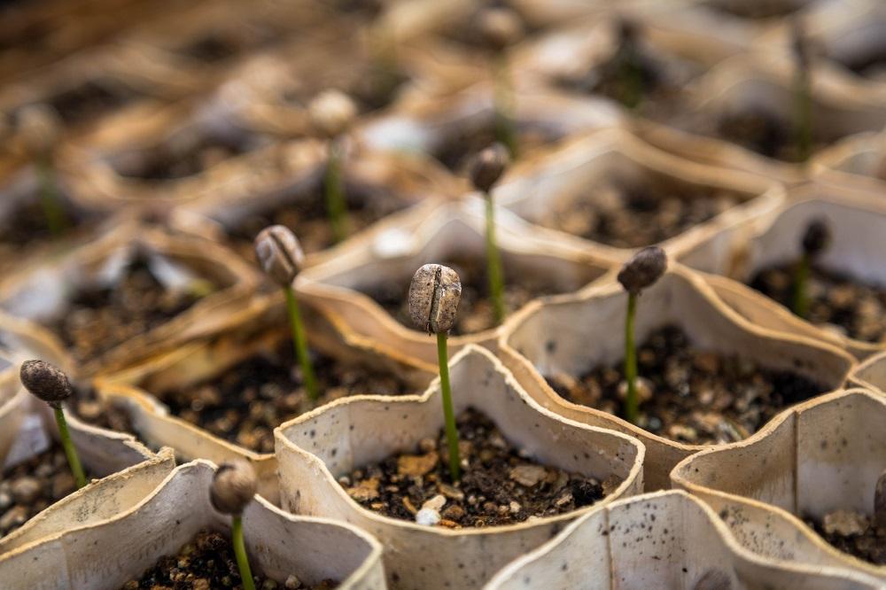 Patarimai sodininkams: ar būtina mirkyti sėklas?