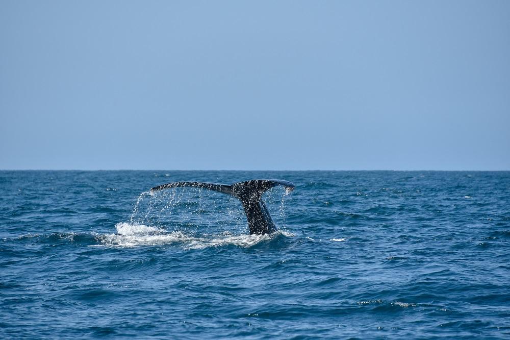 Filipinuose į krantą išplauto banginio skrandyje rasta 40 kilogramų plastiko atliekų