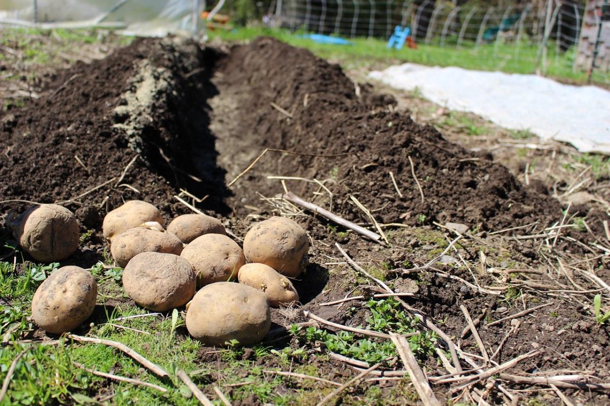 """""""Namie ir Sode"""" aktualijos: daigų auginimas, pirmosios bulvės ir ažūriniai kiaušiniai"""