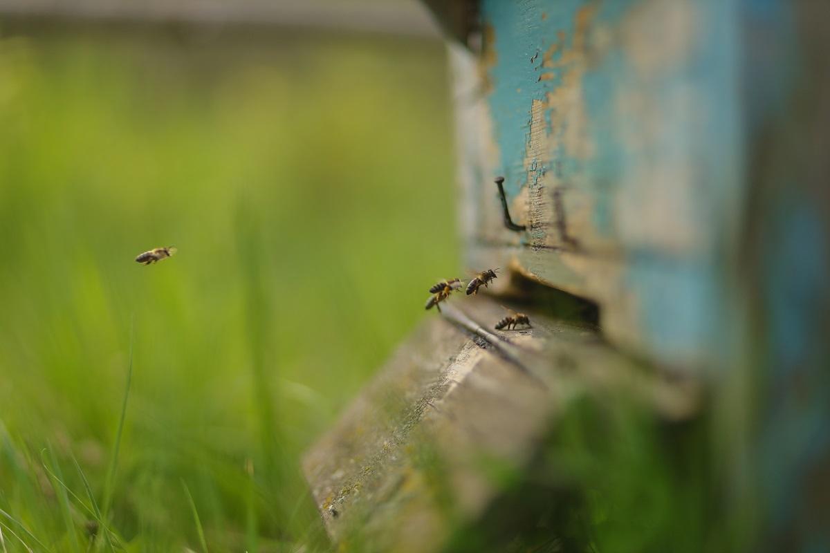 Bičių auginimas: ne į kalendorių, o pro langą reikia žiūrėti