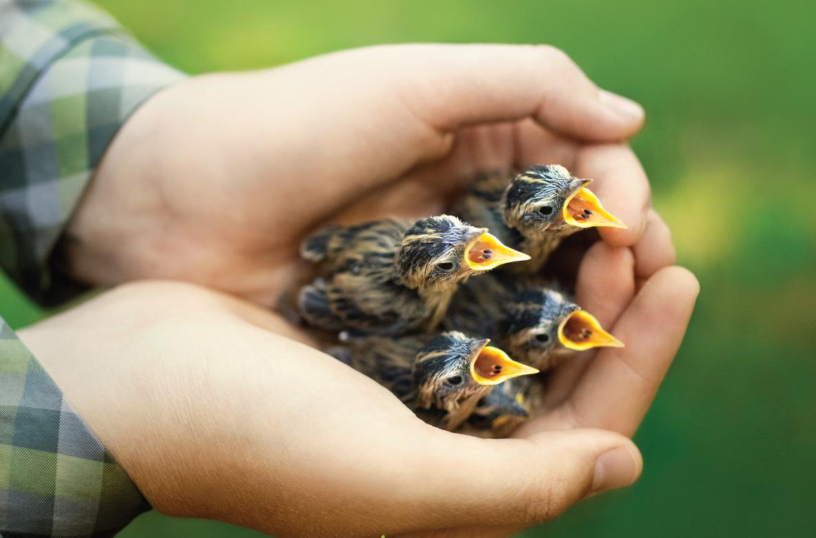 Į Lietuvą atvežta 50 pasaulyje nykstančių paukščių mažylių