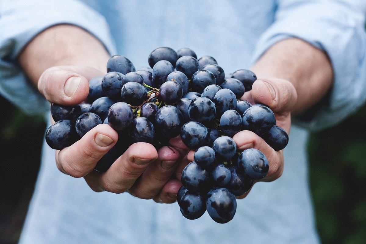 Japonijoje vynuogių kekė parduota už 10 tūkstančių eurų