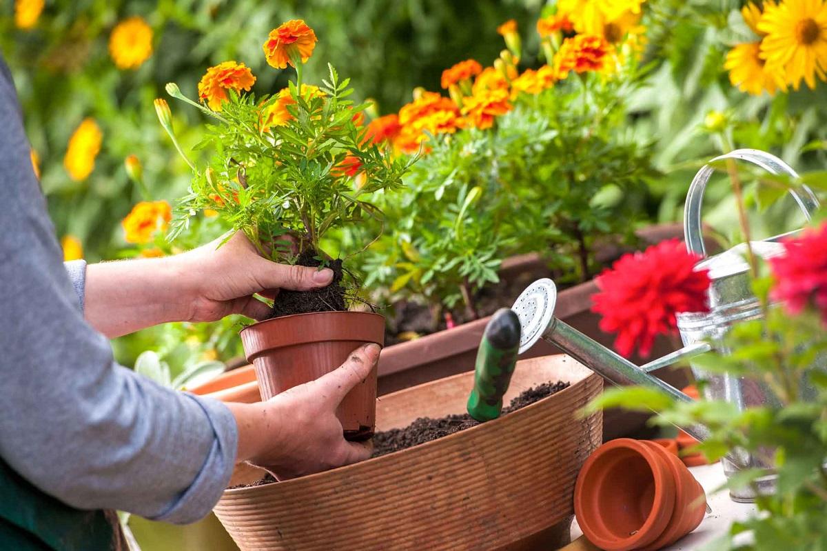 Gėlių tręšimo būdai ir terminai