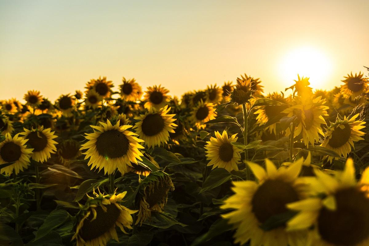 Vasara – geriausias laikas stiprinti savo nervų sistemą