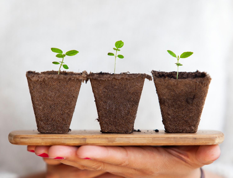 Kaip pasirūpinti savo augalais kelionių metu?