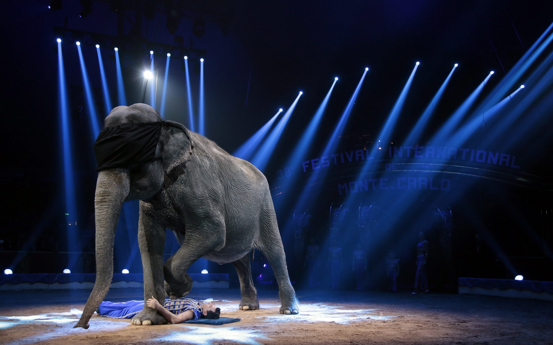 Vyriausybė pritarė siūlymui uždrausti cirko veikloje naudoti laukinius gyvūnus