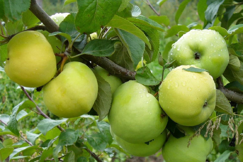 """""""Namie ir Sode"""" aktualijos: moliūgų panaudojimas, dirvos perkasimas ir antaniniai obuoliai"""