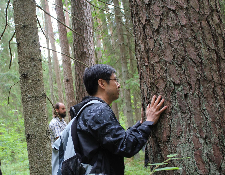 Miško medicina ragina būti gamtoje