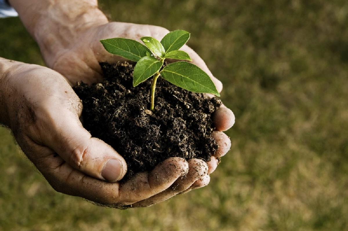 2020-ieji – augalų sveikatos metai